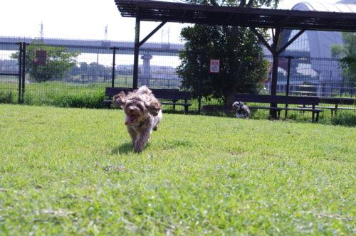 辰巳の森公園ドッグラン