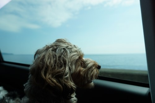 車内からの海