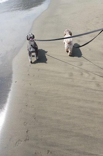 波打ち際散歩