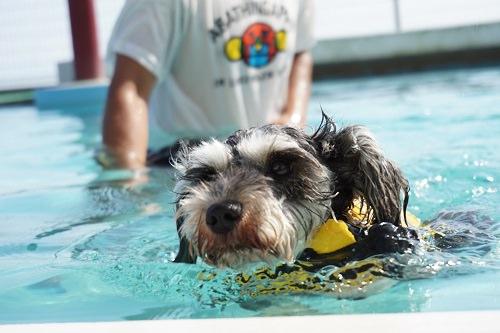 わんパラプール泳ぐゆき