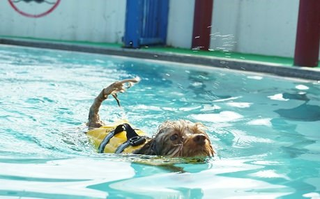 わんパラプール泳ぐむぎ