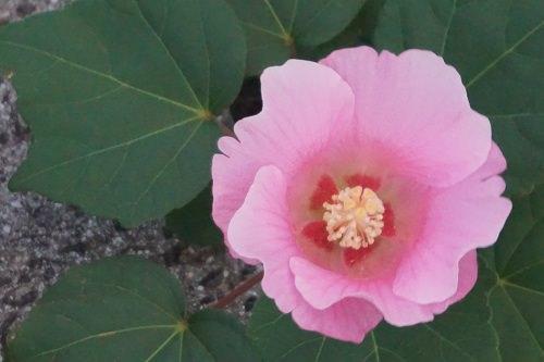 見かけた花
