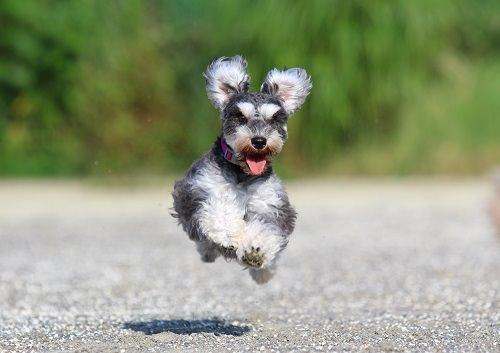 プロカメラ飛行犬ゆき