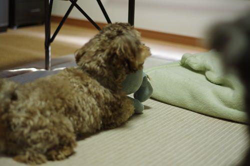 犬 一人遊び