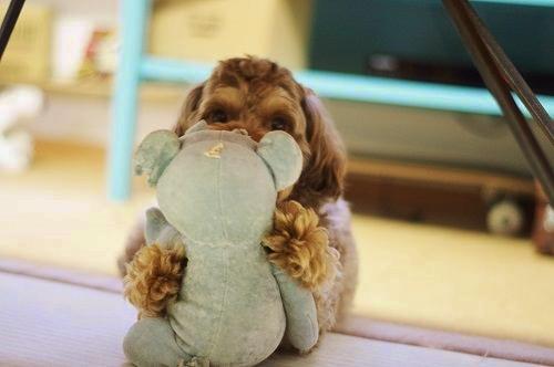 犬 可愛い