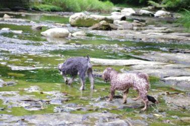粟又の滝 水遊び