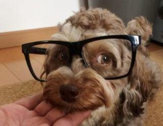 メガネむぎ