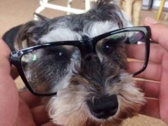 メガネゆき