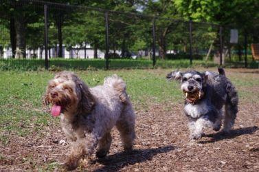 舎人公園ボール遊び