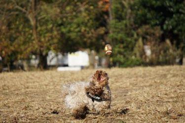 愛犬 キャッチボール