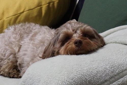 愛犬 退屈